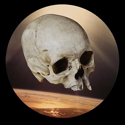 Skull (C) Robyn Stacey