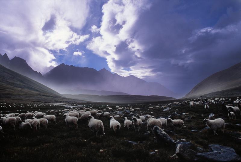 Shahidul Alam_Sheep at Sunset