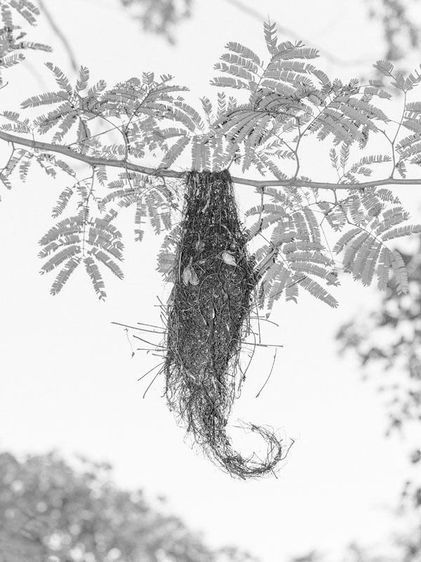 Bird nest c Marten Lange courtesy of the artist