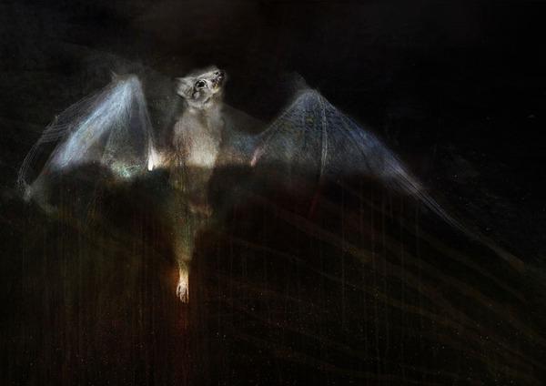 Enid. Micro Bat - Judith Crispin
